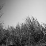 Flora und Fauna auf Hiddensee