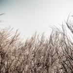 Flora und Fauna auf der Insel Hiddensee