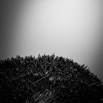 Reetdach am Anleger der Insel Hiddensee