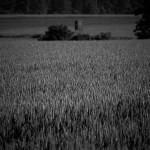 Getreidefelder im Weserbergland