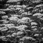 Der Wanderweg um den Hohenstein im Weserbergland bietet eine reichliche Pflanzenwelt