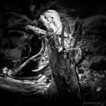 Die fehlende Forstwirtschaft wirkt sich positiv auf ideale Fotomotive aus