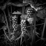 Die Pflanzenwelt im Blutbachtal