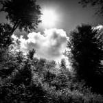 Der Wanderweg von Hämelschenburg nach Emmern führt durch sonnendurchflutete Lichtungen