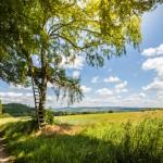 Viele Jagdsitze säumen die Feldränder bei Hämelschenburg