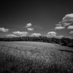 Landschaft am Waldsaum im Naturschutzgebiet Emmertal