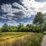 Vorbei an Getreidefeldern durchs Naturschutzgebiet Emmertal