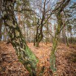 Bild 7 - Zadlitzbruch in der Dübener Heide bei Torgau | © Michael Eichhorn