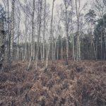Bild 32 - Zadlitzbruch in der Dübener Heide bei Torgau | © Michael Eichhorn