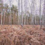 Bild 31 - Zadlitzbruch in der Dübener Heide bei Torgau | © Michael Eichhorn
