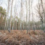 Bild 30 - Zadlitzbruch in der Dübener Heide bei Torgau | © Michael Eichhorn