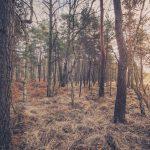 Bild 24 - Zadlitzbruch in der Dübener Heide bei Torgau | © Michael Eichhorn