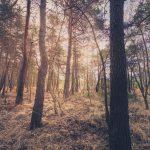 Bild 23 - Zadlitzbruch in der Dübener Heide bei Torgau | © Michael Eichhorn