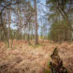 Bild 39 - Zadlitzbruch in der Dübener Heide bei Torgau | © Michael Eichhorn