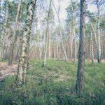Bild 22 - Zadlitzbruch in der Dübener Heide bei Torgau | © Michael Eichhorn
