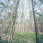 Bild 21 - Zadlitzbruch in der Dübener Heide bei Torgau | © Michael Eichhorn