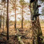 Bild 20 - Zadlitzbruch in der Dübener Heide bei Torgau | © Michael Eichhorn