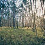 Bild 19 - Zadlitzbruch in der Dübener Heide bei Torgau | © Michael Eichhorn