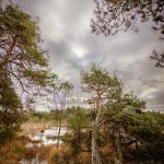 Bild 16 - Zadlitzbruch in der Dübener Heide bei Torgau | © Michael Eichhorn