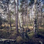 Bild 15 - Zadlitzbruch in der Dübener Heide bei Torgau | © Michael Eichhorn