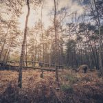 Bild 13 - Zadlitzbruch in der Dübener Heide bei Torgau | © Michael Eichhorn