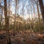 Bild 12 - Zadlitzbruch in der Dübener Heide bei Torgau | © Michael Eichhorn
