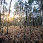 Bild 11 - Zadlitzbruch in der Dübener Heide bei Torgau | © Michael Eichhorn