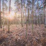 Bild 10 - Zadlitzbruch in der Dübener Heide bei Torgau | © Michael Eichhorn