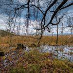 Bild 6 - Zadlitzbruch in der Dübener Heide bei Torgau | © Michael Eichhorn
