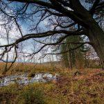 Bild 5 - Zadlitzbruch in der Dübener Heide bei Torgau | © Michael Eichhorn