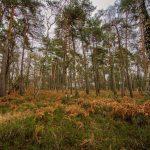 Bild 4 - Zadlitzbruch in der Dübener Heide bei Torgau | © Michael Eichhorn