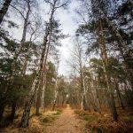 Bild 3 - Zadlitzbruch in der Dübener Heide bei Torgau | © Michael Eichhorn
