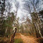 Bild 2 - Zadlitzbruch in der Dübener Heide bei Torgau | © Michael Eichhorn