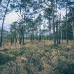Bild 1 - Zadlitzbruch in der Dübener Heide bei Torgau | © Michael Eichhorn