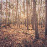 Bild 9 - Zadlitzbruch in der Dübener Heide bei Torgau | © Michael Eichhorn