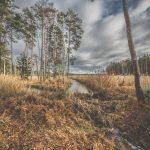 Bild 8 - Zadlitzbruch in der Dübener Heide bei Torgau | © Michael Eichhorn