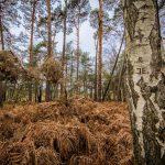 Bild 38 - Zadlitzbruch in der Dübener Heide bei Torgau | © Michael Eichhorn
