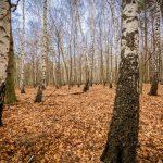Bild 37 - Zadlitzbruch in der Dübener Heide bei Torgau | © Michael Eichhorn