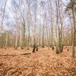 Bild 36 - Zadlitzbruch in der Dübener Heide bei Torgau | © Michael Eichhorn