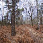 Bild 34 - Zadlitzbruch in der Dübener Heide bei Torgau | © Michael Eichhorn