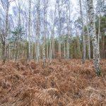 Bild 33 - Zadlitzbruch in der Dübener Heide bei Torgau | © Michael Eichhorn