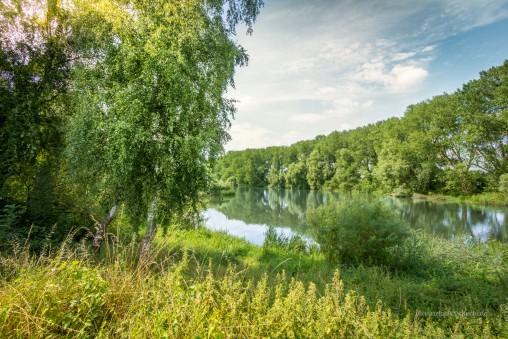Naturschutzgebiet im nördlichen Doktorsee bei Rinteln