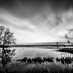 Die Elbwiesen in Dommitzsch sind Überschwemmungsgebiet und dienen dem Hochwasserschutz | www.metapherschwein.de, © 2015 Michael Eichhorn