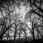 Alte Obstbaumplantage in den Dommitzscher Elbwiesen | www.metapherschwein.de, © 2015 Michael Eichhorn