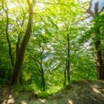 Buchenwald an der Steilküste im Biosphärenreservat Südost-Rügen | Fotografiert von www.metapherschwein.de