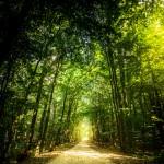 Wanderweg durch einen Buchenwald beim Ostseebad Binz | Fotografiert von www.metapherschwein.de