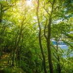 Buchenwald im Sonnenlicht an der Steilküste im Biosphärenreservat Südost-Rügen | Fotografiert von www.metapherschwein.de
