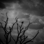 Das Naturschutzgebiet am Ostufer des Steinhuder Meeres dient dem Vogelschutz